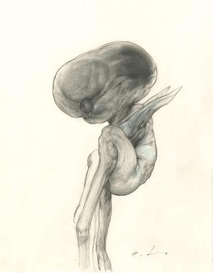 CARLOS HUANTE:  'Beluga'Embryo' drawing